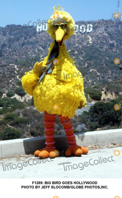 Big Bird Photo -  Big Bird Goes Hollywood Photo by Jeff SlocombGlobe Photosinc