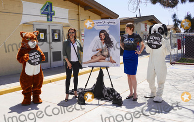 Alicia Machado Photo - Photo by PETASTAR MAXIPx20185318Wearing wings a white gown and a pageant sash reading Angel telenovela star and Miss Universe 1996 Alicia Machado appears with a fluffy cat in a new PETA Latino ad that proclaims Be an Angel for Animals The ad was unveiled today at the Los Angeles Animal Care Center in Downey