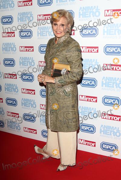 Angela Rippon Photo - LondonUK  Angela Rippon at the Daily Mirror and RSPCA Animal Hero Awards at Grosvenor House Park Lane London 7th September 2017RefLMK73-S666-080917Keith MayhewLandmark MediaWWWLMKMEDIACOM