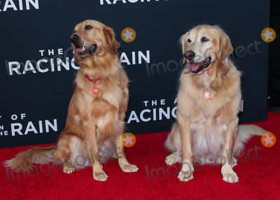 CAST MEMBER Photo - HOLLYWOOD LOS ANGELES CALIFORNIA USA - AUGUST 01 Animal actorscast members Butler and Parker (they play Enzo the dog) arrive at the Los Angeles Premiere Of 20th Century Foxs The Art Of Racing In The Rain held at the El Capitan Theatre on August 1 2019 in Hollywood Los Angeles California United States (Photo by Xavier CollinImage Press Agency)