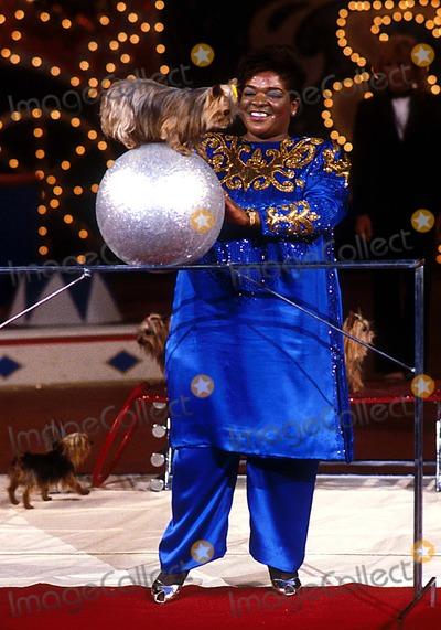 Nell Carter Photo - Nell Carter Photo Allan S Adler Ipol Globe Photos Inc Nell Carter Nellcarterobit