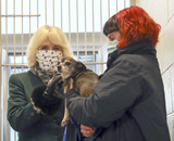 Photos From Camilla Duchess of Cornwall Visits Battersea Dogs and Cats Home